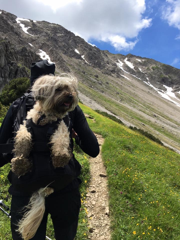 Qualitäts- Profirucksack zum Tragen von Hunden