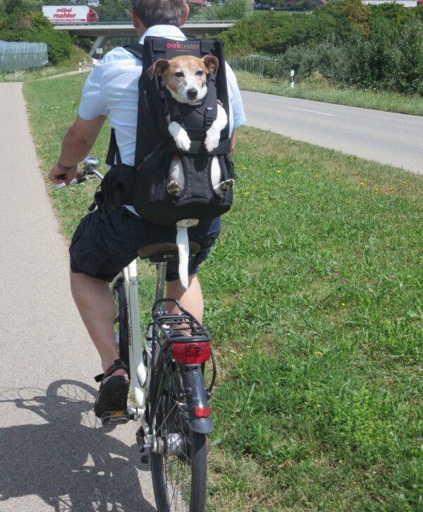 Hundebox oder Hundetasche