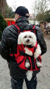 Zaino per cani