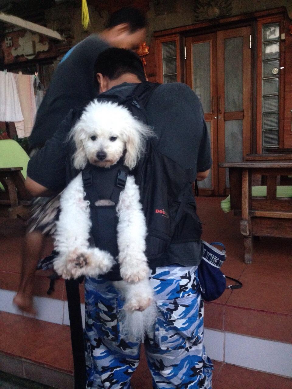 Hundetasche zum Tragen von hunden bis 30kg