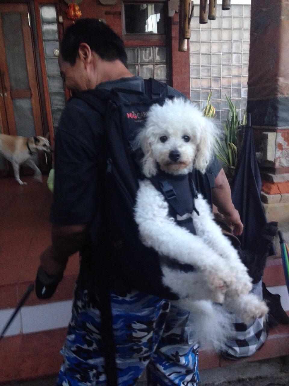 Hier ein behinderter Hund in der Dog carrier Hundettasche