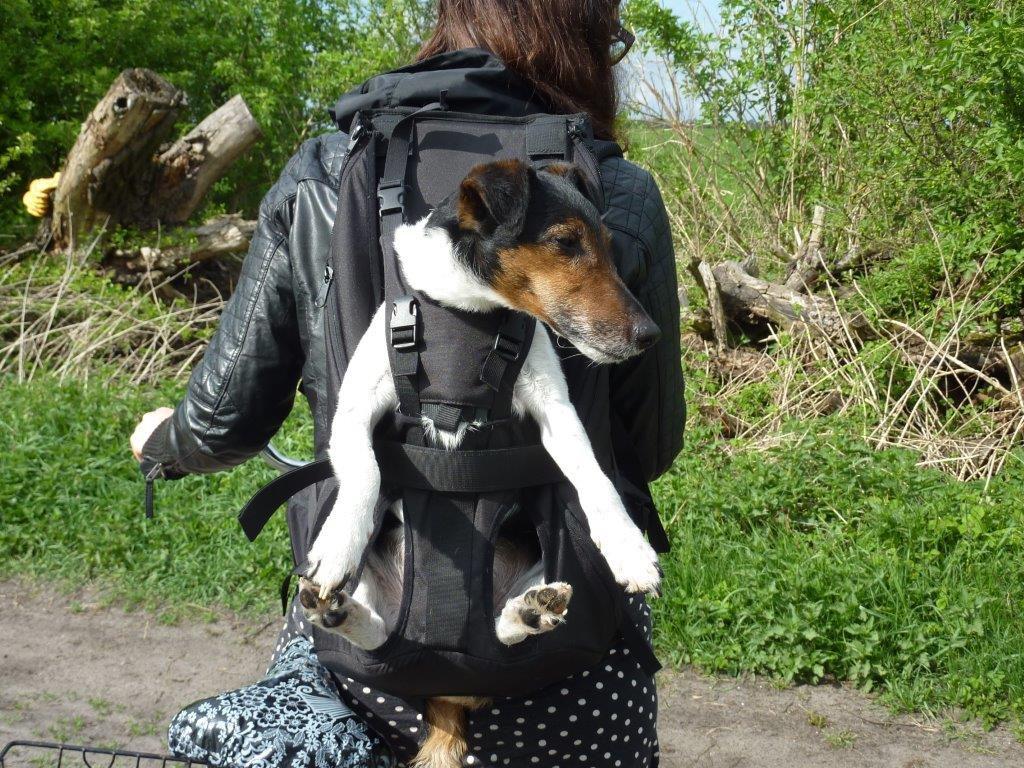Hundetrage mit Jack-Russel