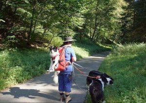 Hundetragetasche zum Tragen von hunden bis 30kg