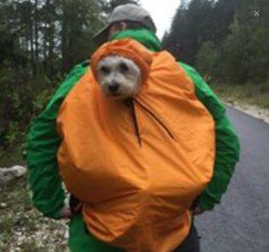 Die Hundetrage von DogCarrier mit Regenschutz als Cape