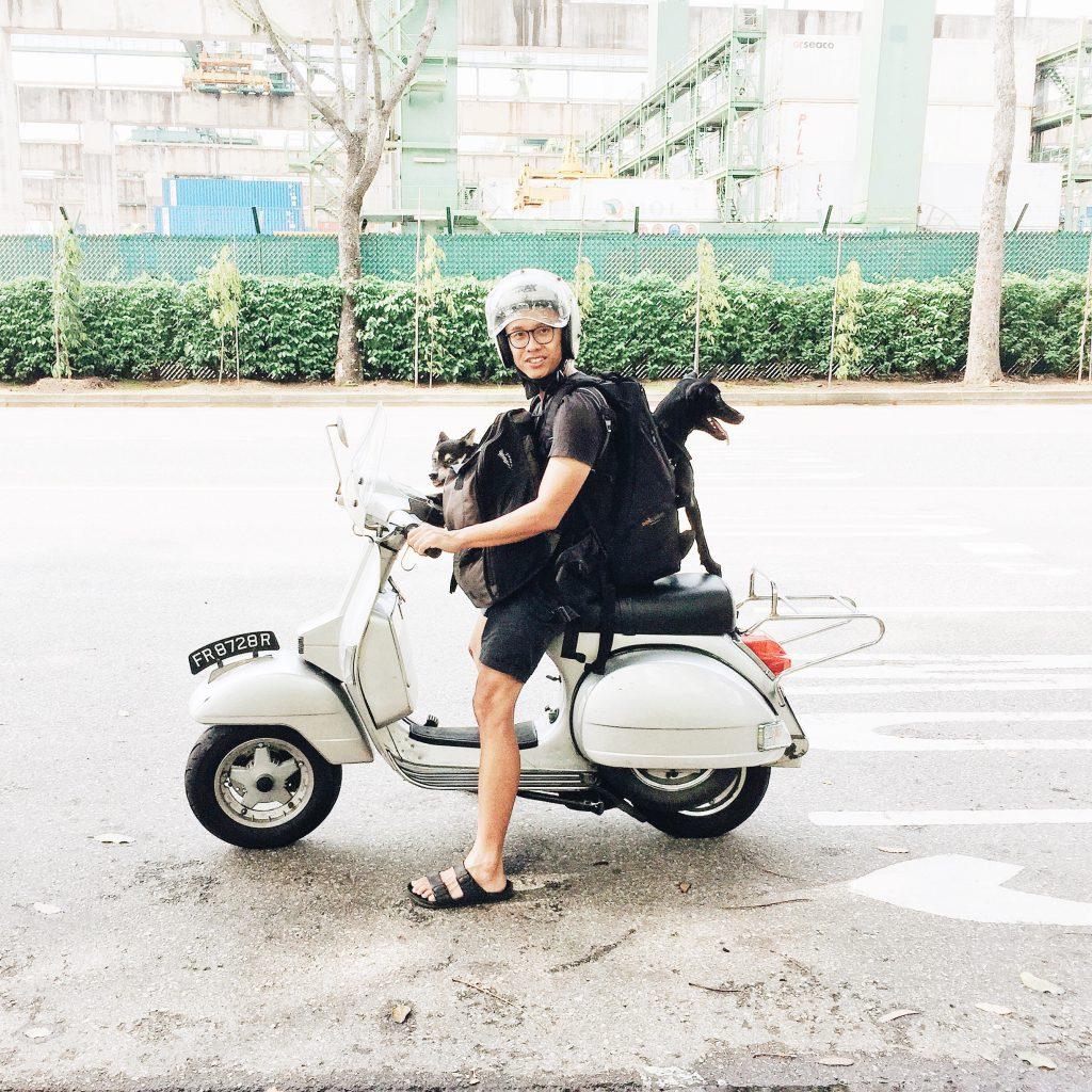 Rucksack zum Tragen von Hunden