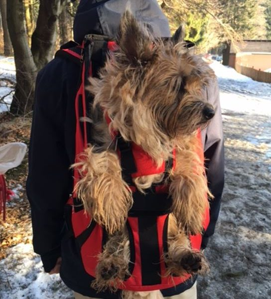 Hunderucksack mit Kernel Terrier