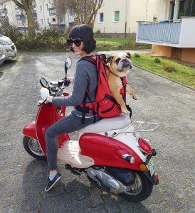 Hunderucksack bis 30 kg