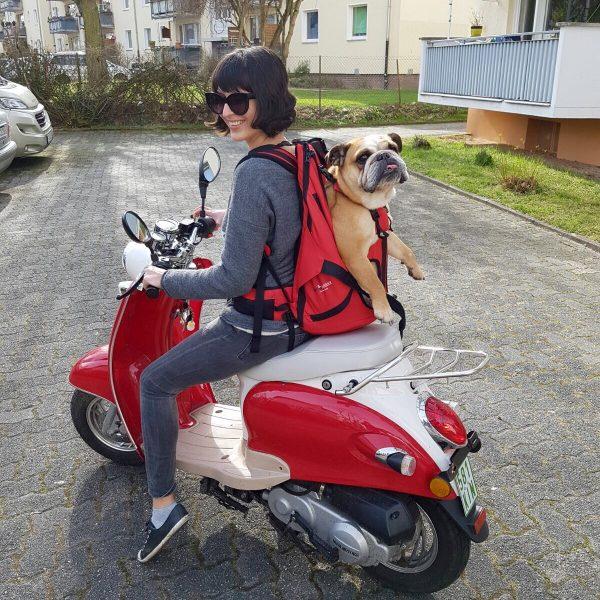 Kundenalbum-Hunderucksack Dog Carrier im Einsatz