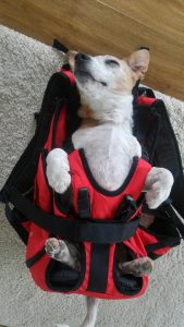 Hunderucksack bzw. Hundetasche zum Tragen von Hunden bis 16 kg Gewicht