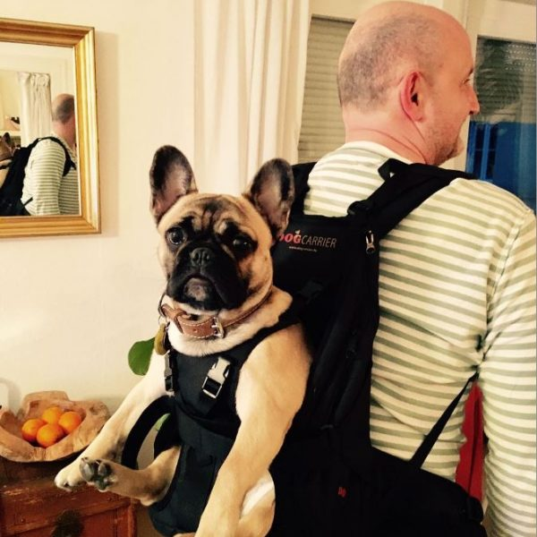 Hunderucksack_French_Bulldog