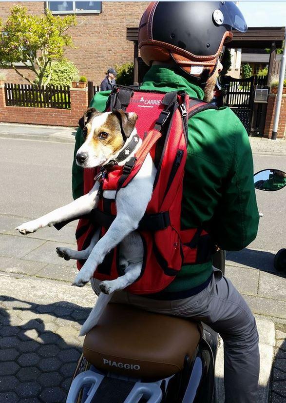 Hundetragerucksack (2)