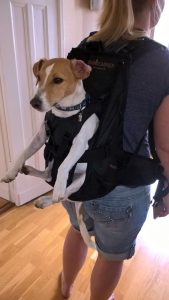 Carrying system for transporting dogs