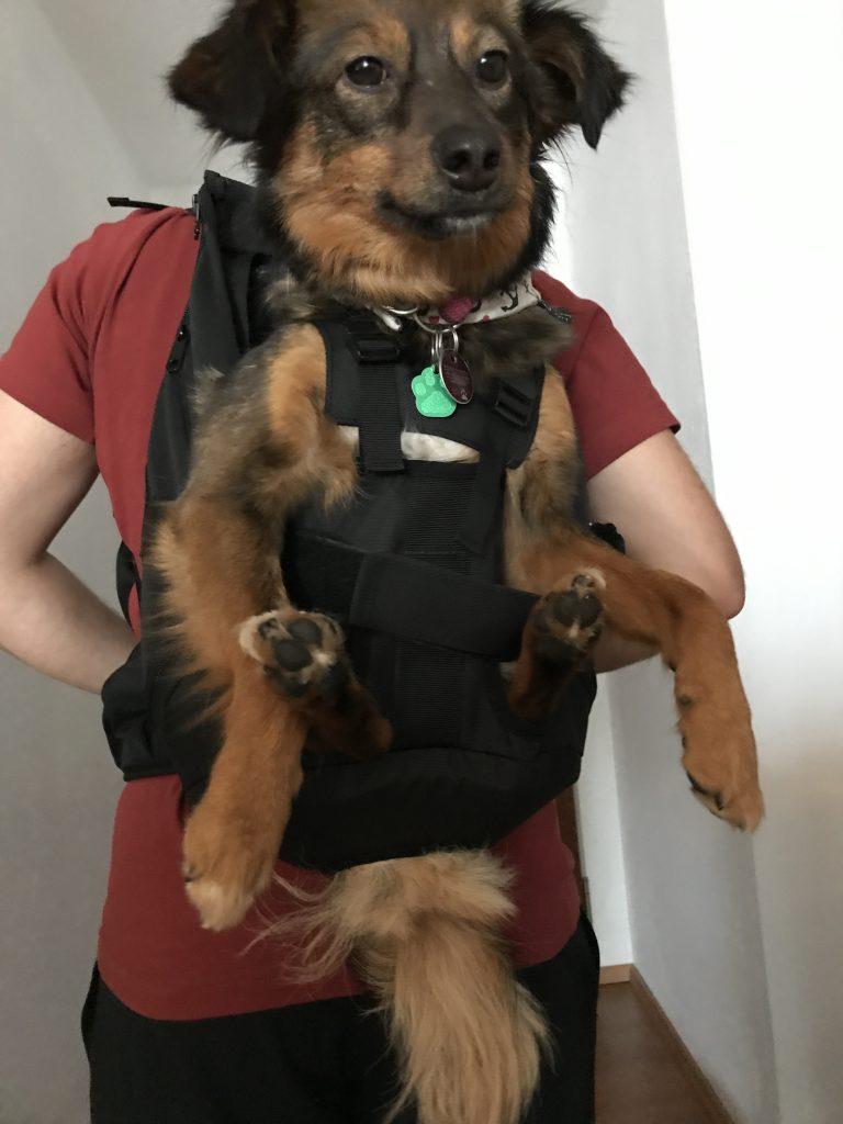 Ein professioneller Hunderucksack zum Tragen von Hunden bis 10kg Gewicht