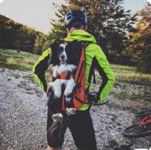 DogCarrier dog carrier
