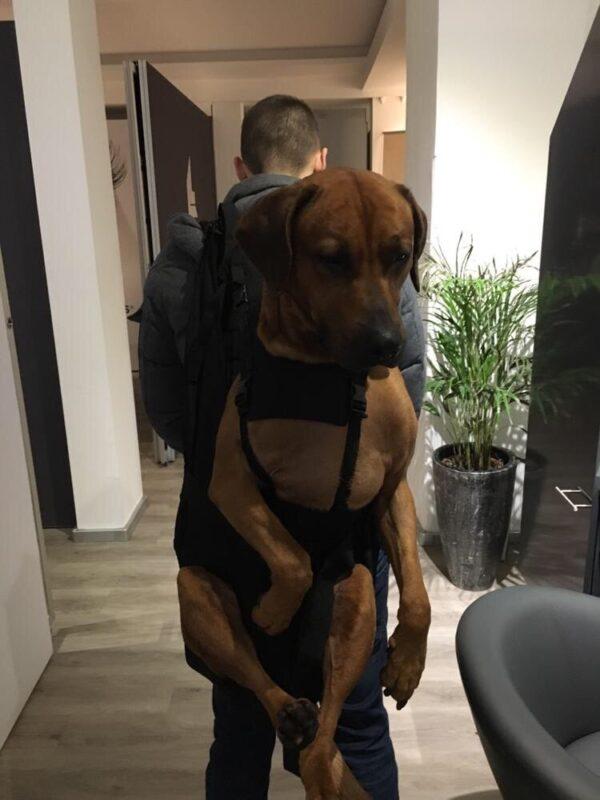 Hunderucksack für Hunde bis 30 kg als noch nicht abgeschlossener Prototyp