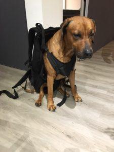 xxl hunderucksack zum tragen von hunden bis 30 kg gewicht. Black Bedroom Furniture Sets. Home Design Ideas