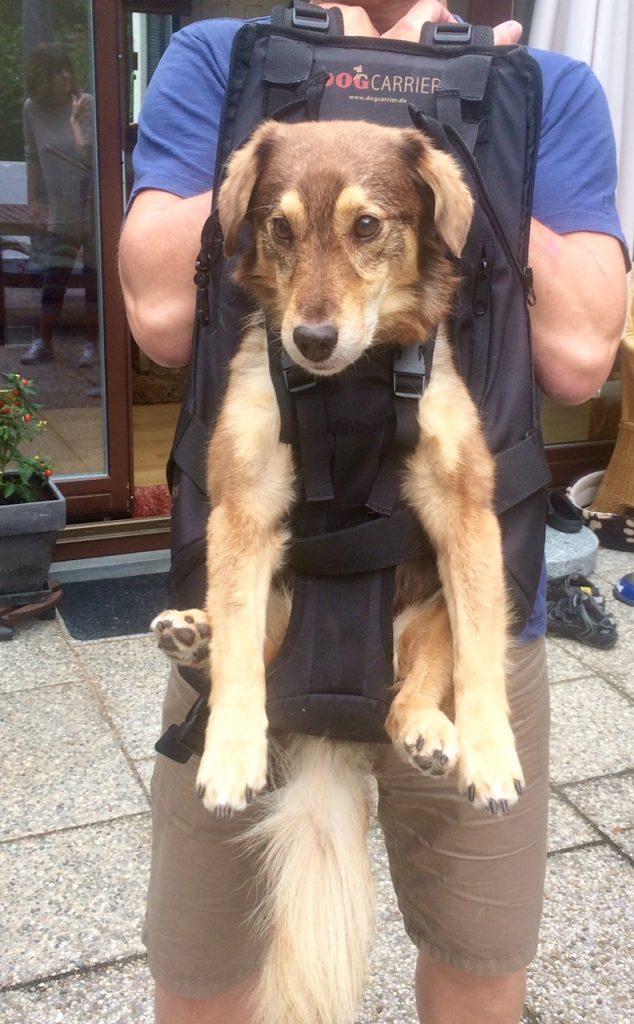 Hundetragerucksack bzw. Hundetasche