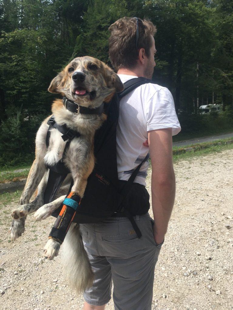 Rucksack zum Tragen von Hunden von Dog Carrier