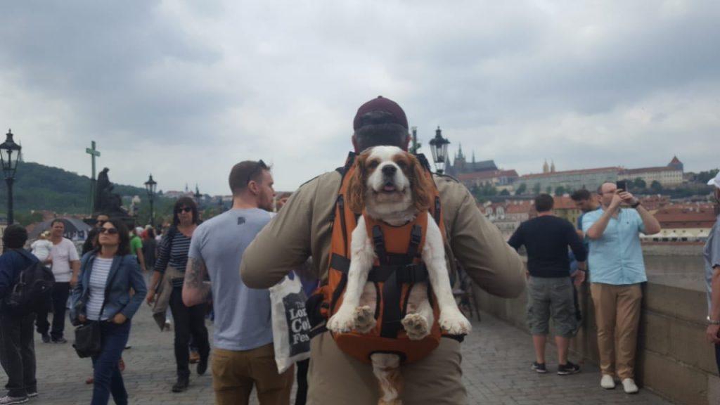 Hunderucksack / Hundetrage / Rucksack für Hunde zum Tragen von Hunden bis 30 kg