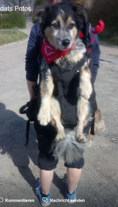 Die Hundetrage ist ideal zum Transportieren von Hunden