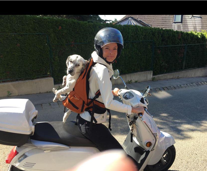 Hund im Rucksack auf dem Roller