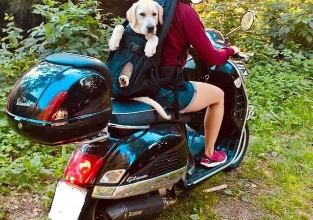 Hundetragerucksack XXL bis 30kg Gewicht