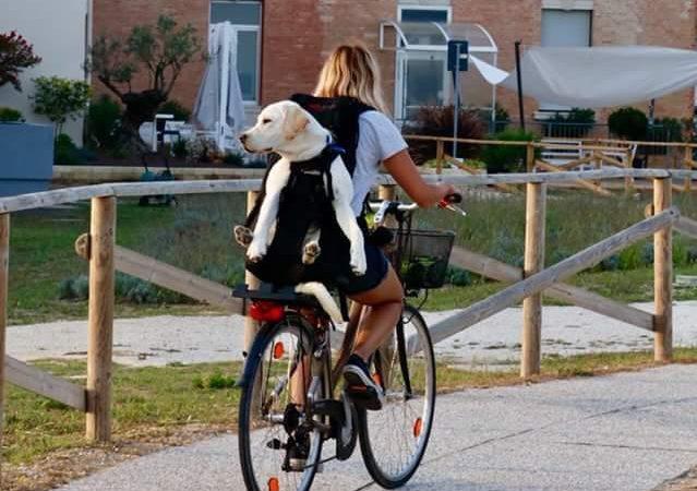 Hundetrage für schwere Hunde