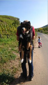 As a dog bag – WINNER - you can find this professional – dog backpack. It´s for dog carrying of 3 – 30kg, as MINI (MINI (from 3-6kg, back length up to 35cm (measured from tail root to neck)).SMALL (back length (measured from tail root to neck))up to 42cm and 5-10kg), BIG bis53cm back length (measured from tail root to neck)up to 7-16kg).and XXL (measured from tail root to neck) up to about 70cm and 15-30kg) - Here in you can carry dogs of different breeds with a minimum weight of 3 kg to about 30 kg weight! The MINI DogCarrier, the smallest dog backpack, for dogs of 3-6kg has been added. The MINI – and the SMALL DogCarrier are also wearable on the chest.