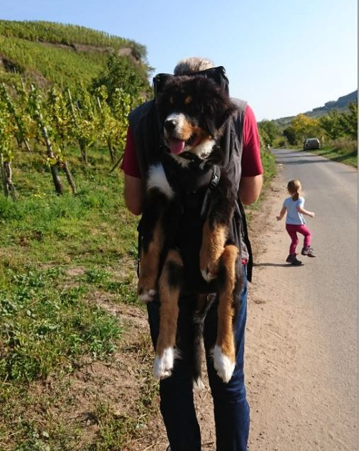 As a dog bag – TEST WINNER - you can find this professional – dog backpack. It´s for dog carrying of 3–30kg, as MINI (MINI (from 3-6kg, back length up to 35cm (measured from tail root to neck)).SMALL (back length (measured from tail root to neck))up to 42cm and 5-10kg), BIG up to 53cm back length (measured from tail root to neck)up to 7-16kg).and XXL (measured from tail root to neck) up to about 70cm and 15-30kg) - Here in you can carry dogs of different breeds with a minimum weight of 3 kg to about 30 kg weight! The MINI Dog Carrier, the smallest dog backpack, for dogs of 3-6kg has been added. The MINI – and the SMALL DogCarrier are also wearable on the chest.