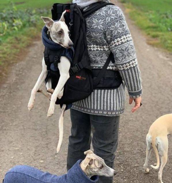 Rucksack / Hund / Hundetasche / Hundebox für schwere Hunde / Hunderucksack