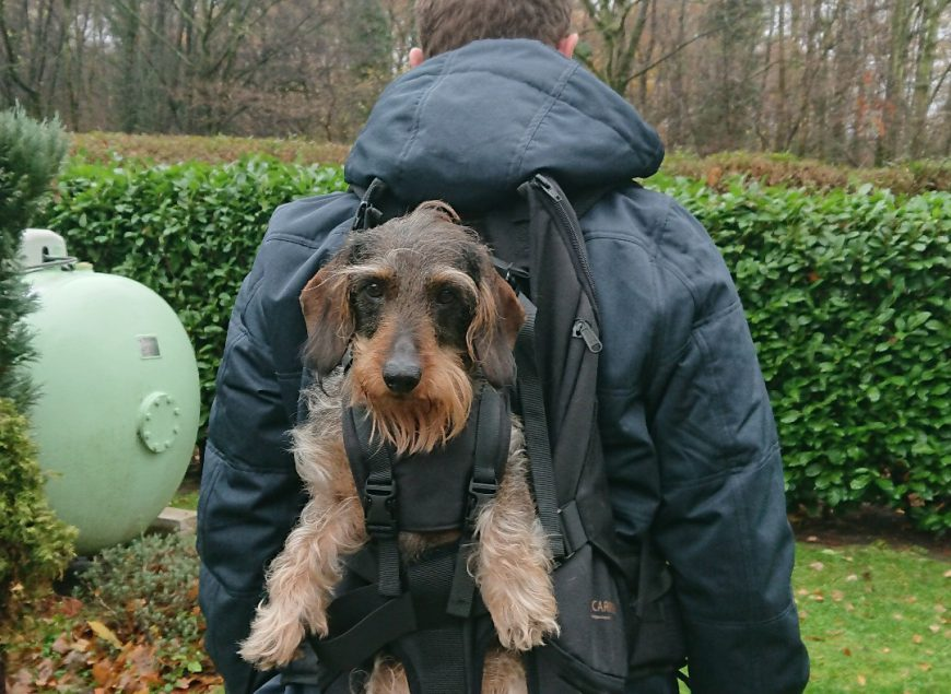 The dog bag as a backpack for dogs/dog backpack for carrying dogs up to 30kg