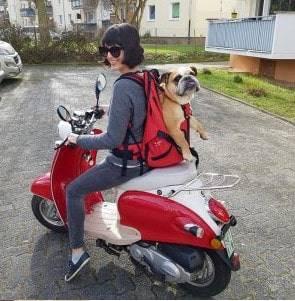 backpack for dogs DOG CARRIER