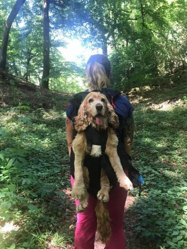 Hunderucksack mit Spaniel