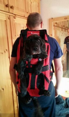 Der professionelle Hunderucksack zum Tragen von Hunden