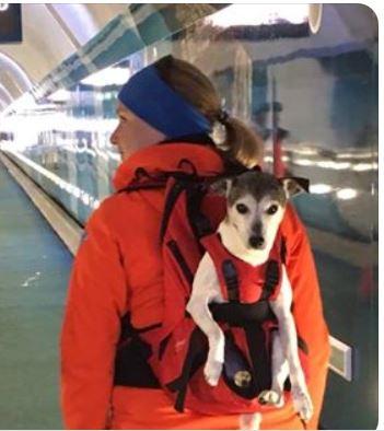 Dog Carrier Hunderucksack als geeignetes Transportmittel zum Bahnfahren