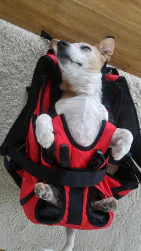 Rucksack bzw. hundetasche zum Tragen von Hunden