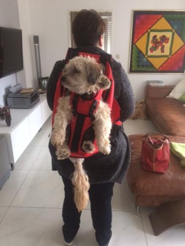 Hunderucksack (2)