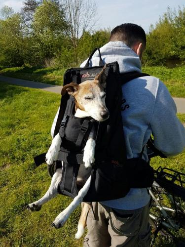 Hunderucksack zum Tragen von Hunden
