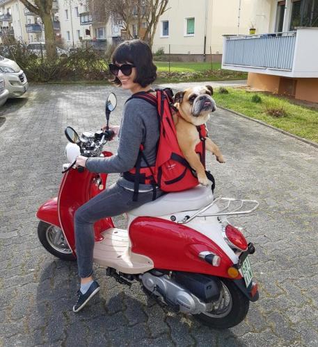 Hundetasche als Hunderucksack von Dog Carrier