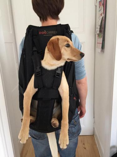 Der Hundetragerucksack bis 16 kg Gewicht