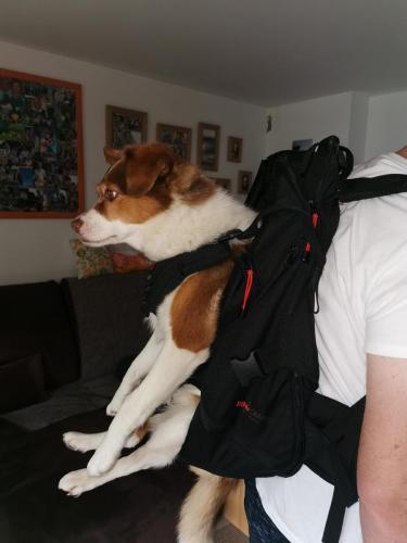 Hunderucksack Dog Carrier