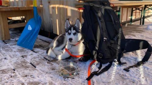 Rucksack_für_Hunde_2