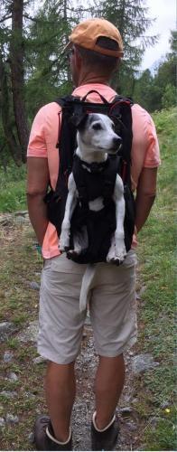 Hundetasche als Hunderucksack
