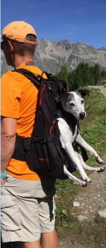 Bergwandern Rucksack Hund