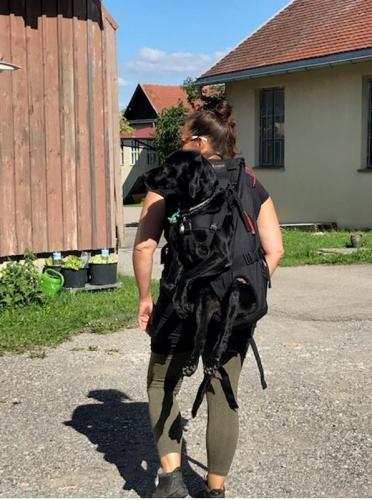 Großer Hunderucksack