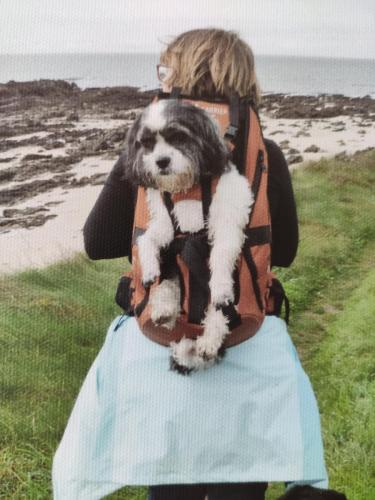 Hundetrage für Hunde bis 16kg