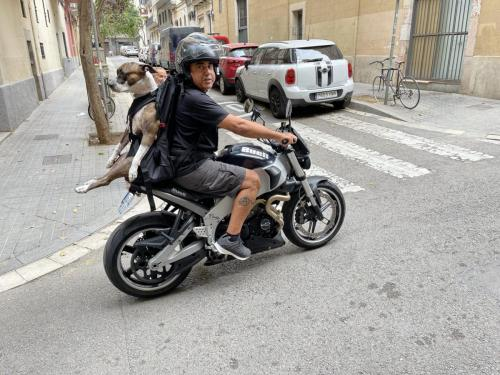 Der patentierte XL DOG CARRIER
